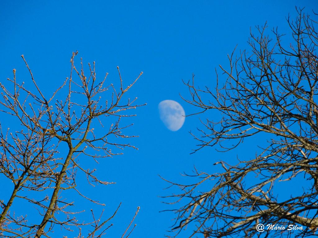 Águas Frias (Chaves) - ... a lua entre as árvores ... - dez 14