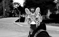 Zebra bw (wolfram2burner) Tags: oregon campus uo zebra burner uoregon universit constume wolfrm