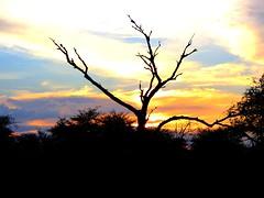 Sunset at Satara Rest Camp. (Bruwer Burger.) Tags: sunset camp rest satara