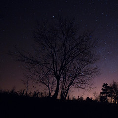Star Tree (Lux Obscura) Tags: shadow sky tree night fence star sticks darkness silhouettes clarity leaning perseus constellation realistic cassiopeia