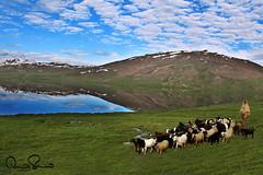 gujjar (TARIQ HAMEED SULEMANI) Tags: travel tourism trekking tariq northernpakistan skardu supershot sulemani tariqhameedsulemani