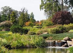 Japanese Garden (Kaptain Kobold) Tags: kaptainkobold japanese garden horticulture cooma nsw australia lake pond waterfall cascade