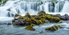 Just another foss (katrin glaesmann) Tags: iceland unterwegsmiticelandtours photographyholidaywithicelandtours moss green foss water waterfall rocks fosslar