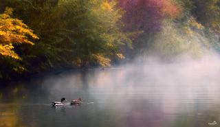 Enchanting waters