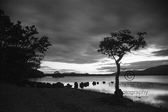 Tree Water and Rocks  - Calm Black and White View -  Loch Lomond at Milarrochy Bay  - Scotland (Magdalen Green Photography) Tags: treewaterandrocks calm zen blackandwhiteview landscape magdalengreenphotography moody lochlomond milarrochybay scottishlandscapes pretty trees loch bonniescotland scotland water rocks longexposure 3573