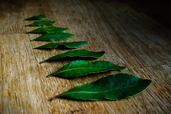 Bay Leaves (gabrielangus) Tags: order 7dwf crazy tuesday theme