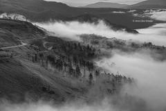 Morning Mist  (Alpha 2008) Tags:                   japan hokkaido lake morning mist nature fog landscape blackandwhite monochrome sunrise trees woods sony alpha