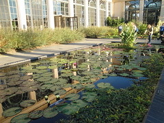 Water lily ponds.  Another favorite feature of mine at Longwood. (``` November Rain ```) Tags: longwoodgardens waterlilies lilypads pond