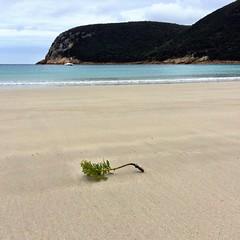 Bracken. Beach. Deal Island, Kent Island Group, Bass Strait.