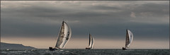 Three White Spinnakers (rogermccallum) Tags: sail sailing silent spinnaker spinnakers roundtheisland boats boating