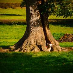 Peeking out (milo42) Tags: peak district national park httpwwwchrisnewhamphotographycouk 2016 meetup chatsworth peakdistrictnationalpark peakdistrict derbyshiredalesdistrict england unitedkingdom gb