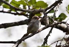(careth@2012) Tags: nature wildlife beak feathers