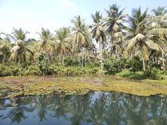 Villages Near Calicut Kerala Photography By CHINMAYA M (11)