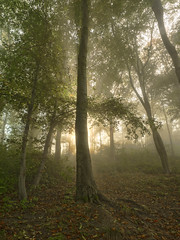 The blessed tree of the forest (Cornish Northerner) Tags: mystical magical sunbeams sun rays forest wood coppice morning beauty serene serenity light