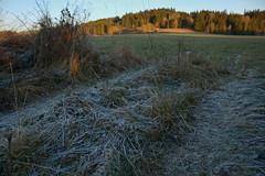 DSC_7032 (Karel Suchnek) Tags: evening sunset late autumn firstfrost