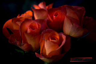 A Rose is a rose is a rose is a rose.
