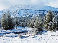 Yosemite High Country Snow 2015 (inkknife_2000 (7 million views +)) Tags: easternsierranevada yosemitenationalpark california usa landscapes mountains snow snowonmountains dgrahamphoto creek mountaincreek snowscene rocks tuolumnemeadows vistas snowongrass forest trees pines snowontrees