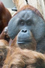 zoo heidelberg5 (micnie) Tags: heidelberg germany zoo tiere nikon d5200 vogel affe otter elefant gorilla schimpanse lwe waschbr schildkrte zebra straus papagei badenwrthenmberg
