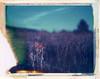 Flagstaff, AZ (moominsean) Tags: polaroid 190 instant iduv expired042004 arizona flagstaff humphreyspeak southwest sunset dusk flowers desert mountain volcano