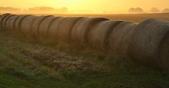 landscape of childhood (joy.jordan) Tags: farm field hay sunrise light texture 52by52 ruralwisconsin onmywaytovolunteerinprison