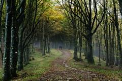 Walking in the wood (Strocchi) Tags: camminare walking wood bosco nebbia fog forestecasentinesi camminatefotografiche canon eos6d eremodicamaldoli 24105mm