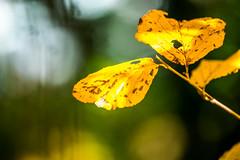 DSC_1265 (Darjeeling_Days) Tags: