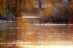 Intanto che i sogni.. (swaily ◘ Claudio Parente) Tags: nikon d300 nikond300 lago lake acqua water abruzzo ortucchio claudioparente sunset
