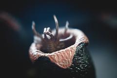 free hugs.. (jdewinnaar) Tags: alien xenomorph facehugger hug canon helios helios44m 5dmkii bokeh stilllife depthoffield m42 44m naturallight dark gloom blur egg