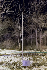 Michel Tognini (Granmuc) Tags: baikonur cosmonaut alley trees
