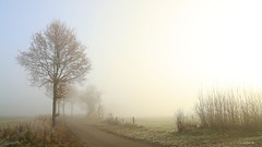 Foggy December day (2) (claudia-w.) Tags: schleswigholstein northerngermany fog