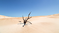 Tree and sand #4 (RWYoung Images) Tags: rwyoung canon 5d3 tree sand sanddune dune southaustralia arid desert deadtree