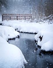 December stream (Little Blind Chicken) Tags: winter spring december stream snow snowy snowfall kharkiv ukraine украина харьков