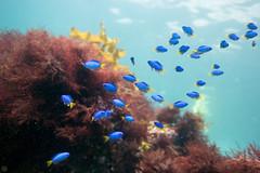20150905-DSC_3414.jpg (d3_plus) Tags: sea sky fish beach japan scenery underwater diving snorkeling  shizuoka    apnea izu j4  waterproofcase    skindiving minamiizu       nikon1 hirizo  1030mm  nakagi 1  nikon1j4 1nikkorvr1030mmf3556pdzoom beachhirizo misakafishingport  1030mmpd nikonwpn3 wpn3