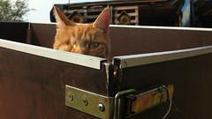 """Feldmann The Cat"": My Home is my Castle! (*Nils aus Kiel*) Tags: cats pets animals tiere funny faces outdoor hidden paws gatto katzen haustiere"
