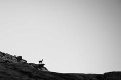 Prali, Giro dei 13 Laghi -22 ( YariGhidone ) Tags: trip sunset mountain love trekking landscape estate lakes bluesky di gita 13 rosso montagna 70200 vr vri laghi vr1 praly prali ghigo cornour