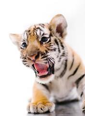 Little Tiger Cub (eggysayoga) Tags: bali cute animal cat 35mm indonesia zoo cub big funny asia f14 tiger fujifilm endangered roar bengal fujinon kebun binatang harimau macan endanger hewan xti xt1 loreng balizoo kebunbinatang