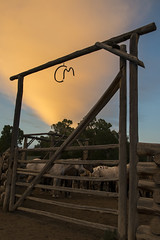 CM Ranch (Nicola Berry) Tags: ranch sunset horses horse slr nikon sigma cm 1750 wyoming dslr equine dubois wy sigma1750 d5300 nikond5300