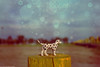 Once in a Lifetime (Marco San Martin) Tags: dog composition photoshop landscape toy toys bokeh paisaje perro doggy onceinalifetime dalmatian perrito dálmata marcosanmartin