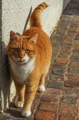 Rosso (stagepiano) Tags: italy italia pentax natura gatto animali trentino lightroom tamron1750 terragnolo
