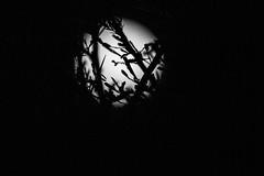 Supermoon take 2 (Dani Nel) Tags: moon night random 2015 mooncheese supermoon supermoon2015