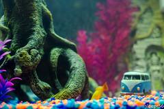 Aquarium-4 (sleepr56) Tags: pet fish bus water vw lost aquarium neon vampire fresh sword phish tetra freshwater neontetra platti platty fishofflickr vampiresword