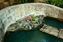 DSC01025 (jgibbon89) Tags: hongkong turtles turtlepond 10000buddhas
