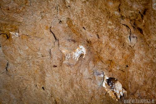 Skamieniałości sprzed 7-10 mln lat