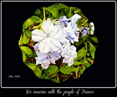 Dedicated to the people of France and the innocents who lost their lives in the tragedy today.  -  Explored (Trinimusic2008 -blessings) Tags: trinimusic2008 judymeikle nature sympathy dedication sadness tears prayers terroristattacksinparis trinidad colours colors tt october 2015 outdoors explored jesuisparis hommageàlensembledesfamillesdesvictimes amitiéetlasympathiedelasolidaritéaveclafrance friendshipandsympathyofsolidaritywithlafrance tributetoallvictimsoffamilies pazenfranciapeaceinfrance jesuisfrance panasonicdmczs45