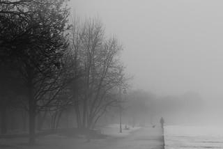 Walking Dog On Boardwalk In Mist ....