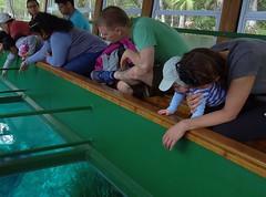 Look At All the Fish (johnandmary.F) Tags: ocalafl silverspringsstatepark artisansprings