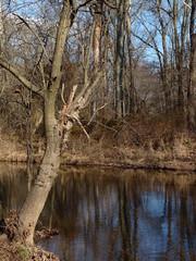 Stream (Dendroica cerulea) Tags: autumn trees reflection creek forest newjersey stream nj brook hopewell mercercounty stmichaelsfarmpreserve