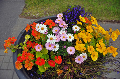Akureyri flowers