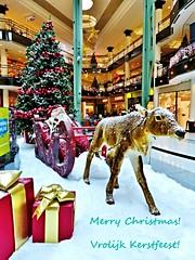 Vrolijk Kerstfeest! Merry Christmas! (Johnny Cooman) Tags: christmas weihnachten belgium belgique belgi nol bel ghent gent aaa gand kerst gante flanders belgien blgica vlaanderen oostvlaanderen flandern belgia flandre flandes eastflanders thegalaxy  flemishregion gentmariakerke flhregion panasonicdmcfz200
