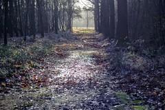 DSCF7414.tif (Ad Sebregts) Tags: tree forest path margriet